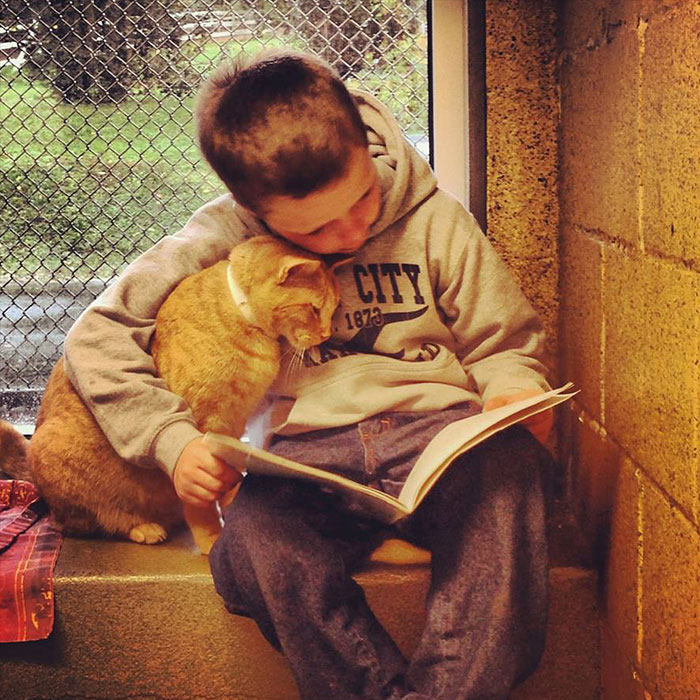 reading-children-shelter-cats-book-buddies-coverimage