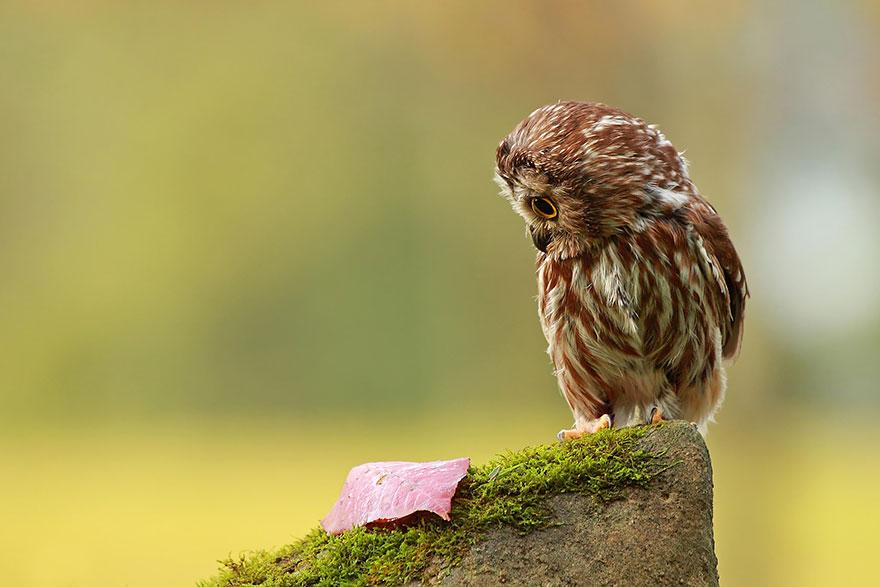owl-photography-25__880