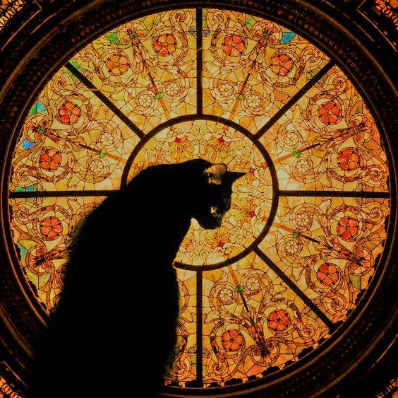 cat (3).png