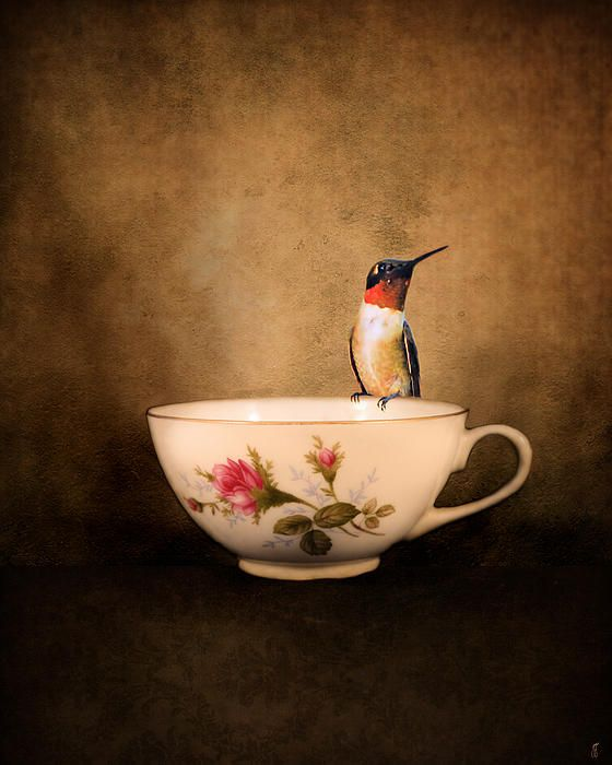 Tea Time With a Hummingbird 2 by Jai Johnson